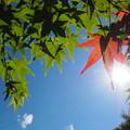 写真: 初夏の陽射しを浴びて