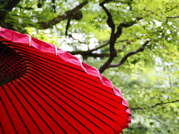 和傘と青紅葉