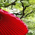 写真: 和傘と青紅葉