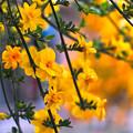 Photos: 黄色の共演