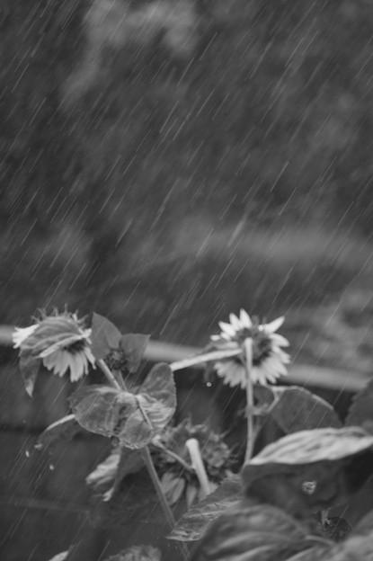 こんな雨いやだ~