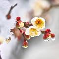 春の訪れ~(^^♪