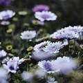 写真: 春ですね~(^▽^)/
