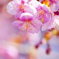 写真: 春の到来?