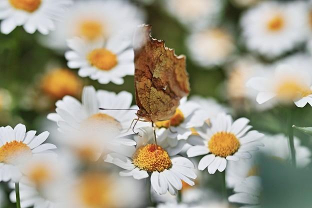 写真: お花に枯葉~(^▽^)/