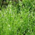 写真: 本日の新緑