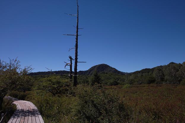 写真: 林を抜けると~