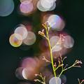 写真: 雨上がり(1)