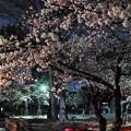 Photos: 夜桜2019(1)