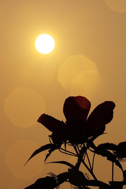 暑い太陽!(;^ω^)