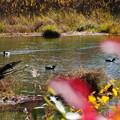 Photos: 池!川!(・・?