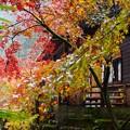 Photos: 濡れる紅葉