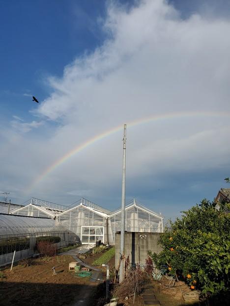 Photos: カー子の虹を渡って~♪