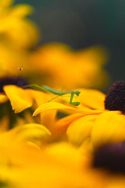 お花は危険地帯!