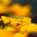 Photos: お花は危険地帯!