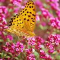 Photos: ここは花園~(#^.^#)