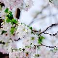 Photos: 秋風に揺られて~(#^.^#)