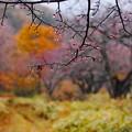 Photos: 光徳沼へ