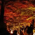 Photos: 楓園へ