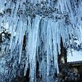 Photos: 氷の刃