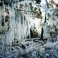 氷柱のカーテン!