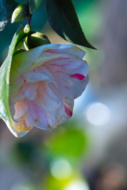 Photos: 癒しの光