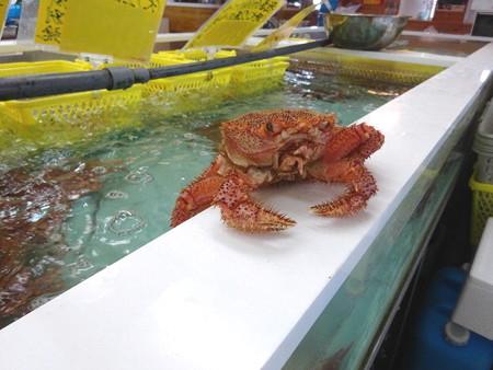 170511-11水槽のふち蟹君