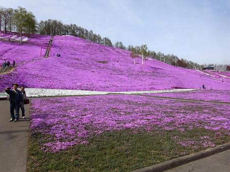 170513-10東藻琴芝桜公園
