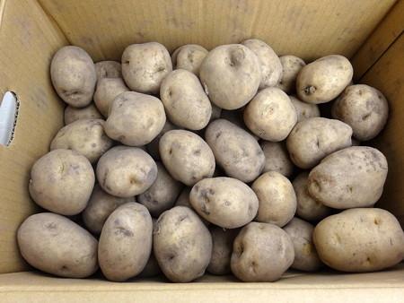 180927馬鈴薯