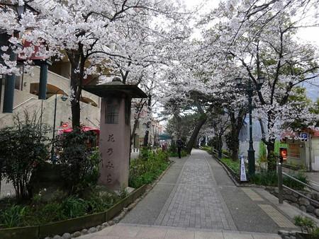 190402-23花の道