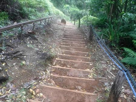 200224-03延々と階段