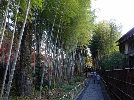 201216-08竹の小径