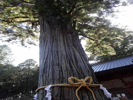 201216-19千年杉