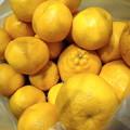 Photos: 210221はるみオレンジ