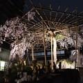 雨の夜は桜も淡く化粧して