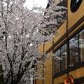Photos: 祇園白川へ