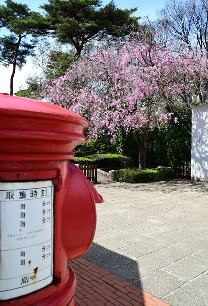 丸ポストと枝垂れ桜