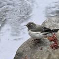近くに来た幼鳥