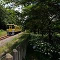 Photos: さあ来るぞ花と一緒に電車待ち