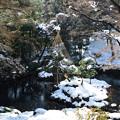 雪吊りのある風景