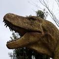 写真: ティラノザウルス登場