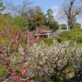 庭園から真幡寸神社を展望