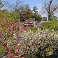 写真: 庭園から真幡寸神社を展望