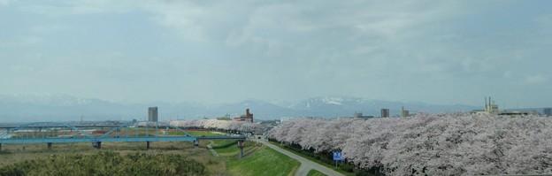 橋と桜と山と