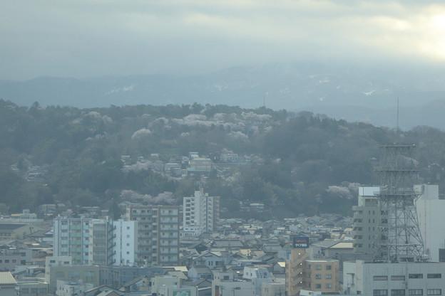 ホテル13階のロビーから朝の桜