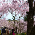 写真: 原谷苑パノラマ