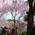 Photos: 原谷苑パノラマ