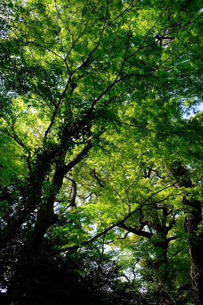 都心の新緑