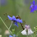 花とシオカラ1