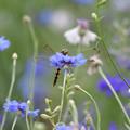 花とシオカラ3